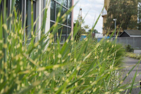Tewes-Kampelmann Galabau Herne Neuanlage HTT Stein in Herne mit Bepflanzung Pflasterarbeiten Sichtschutz (1)