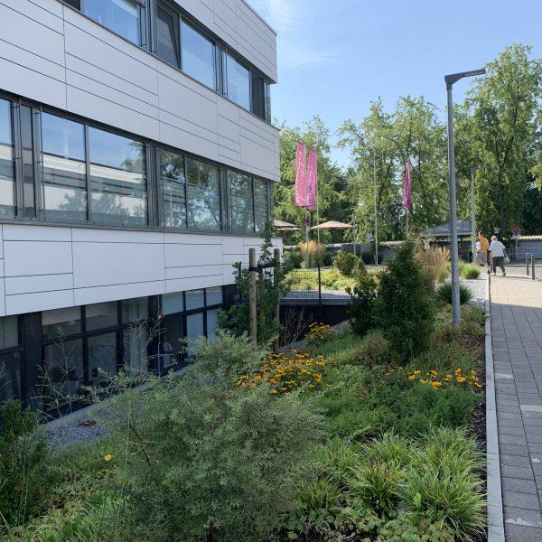 Tewes-Kampelmann Galabau Herne Neuanlage in Herne mit Bepflanzung Pflasterarbeiten Sichtschutz - Außenanlagen EVK Castrop-Rauxel (11)