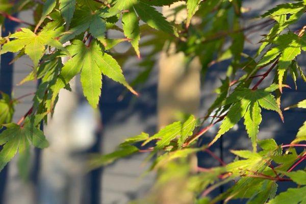 Tewes-Kampelmann Galabau Herne Neuanlage in Herne mit Bepflanzung Pflasterarbeiten Sichtschutz - Privatgarten in Gelsenkirchen (11)