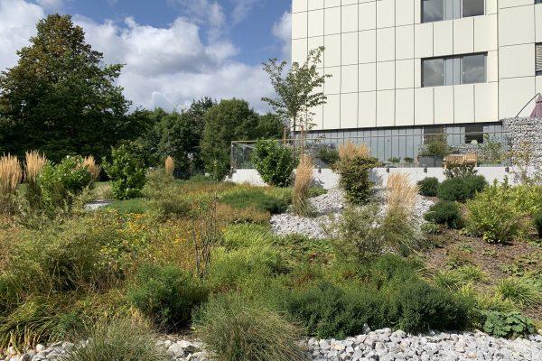 Tewes-Kampelmann Galabau Herne Neuanlage in Herne mit Bepflanzung Pflasterarbeiten Sichtschutz - Terrasse EVK in Herne (9)