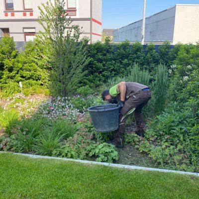 Tewes-Kampelmann Garten- und Landschaftsbau aus Herne - GaLaBau Gartenpflege (4)