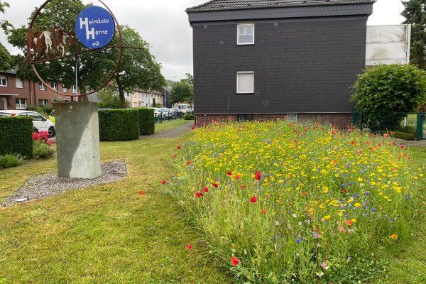 Tewes-Kampelmann Garten- und Landschaftsbau aus Herne - GaLaBau Heimbau Herne Blumenwiese (1)