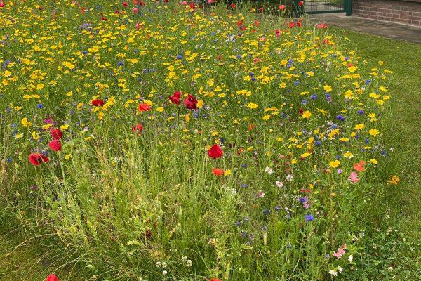 Tewes-Kampelmann Garten- und Landschaftsbau aus Herne - GaLaBau Heimbau Herne Blumenwiese (2)